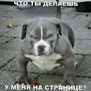 Фотоальбом Айлана Абакаева