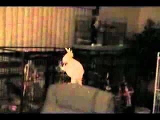 Танцующий попугай  приколы смех смешное