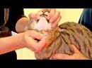 Hier sind einige tipps und tricks wie sie ihrer katze eine tablette verabreich