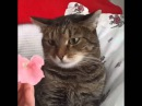 Flower crashes cat. By Sophiella cats n' nails via