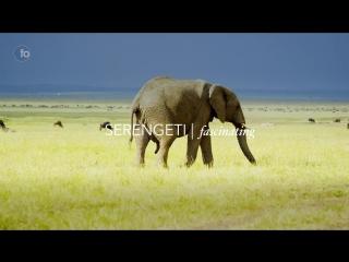 Kenya in 4k- urban to wildlife - stock footage