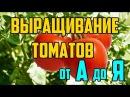 Выращивание томатов в открытом грунте от А до Я / Рассада помидор
