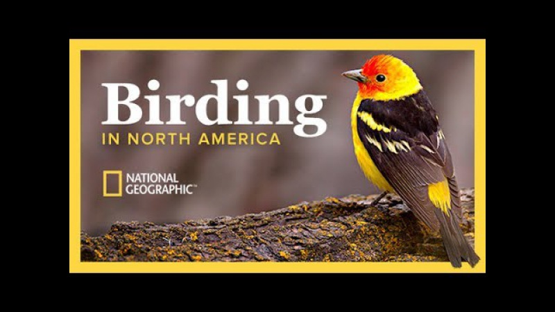 The National Geographic Guide to Birding in North America The Great Courses