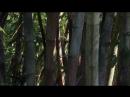 BBC Дикий Китай Шангри Ла 2 серия