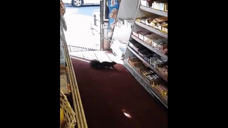 Видео белка пришла за сладеньким Video squirrel came for sweetie Dbltj tkrf ghbikf pf ckfltymrbv