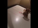 Собакен и настольный хоккей