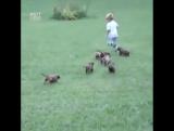 Нападение стаи собак на ребенка(видео не для слабонервных