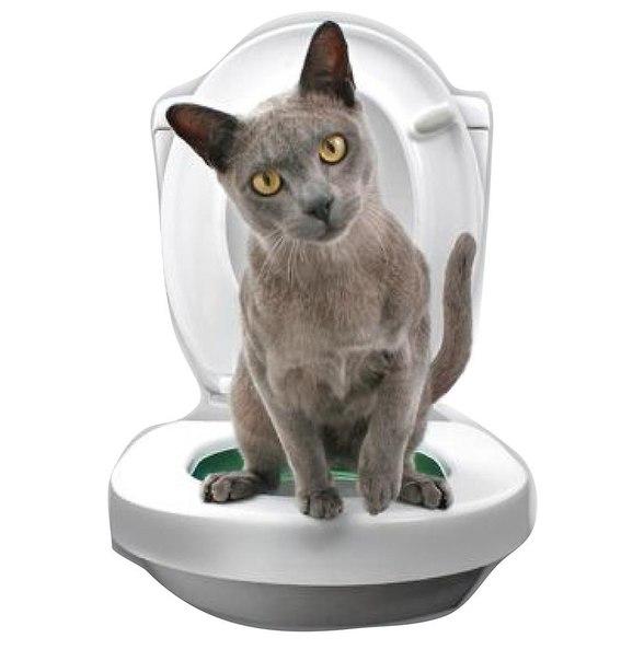 Citikitty cat toilet training kit walmart