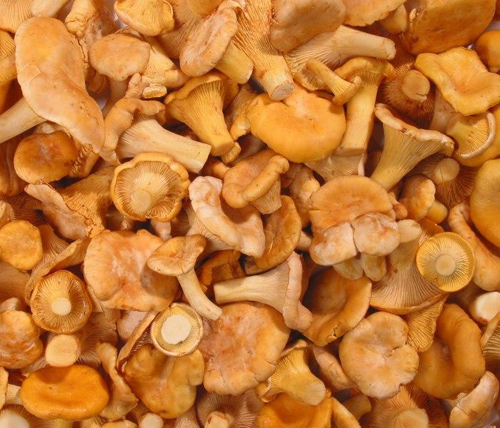 ИзКалужской области продали зарубеж 960 тонн грибов