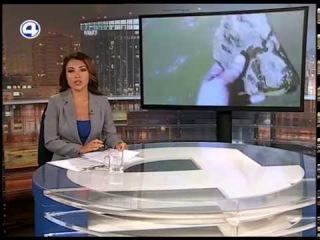 Новости 4 канал - Река Тальтия