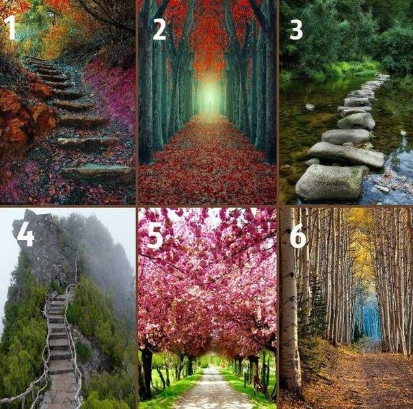 уже тест картинка выбери свою дорогу жизни дерево следует укрывать