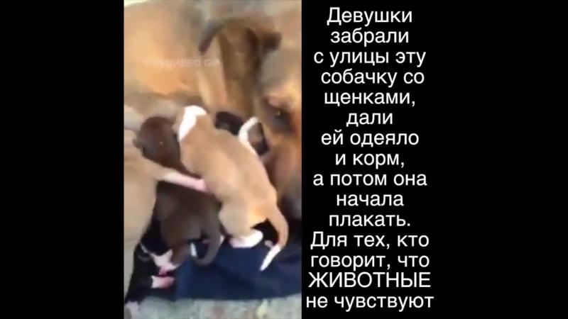 Будьте милосердны к животным