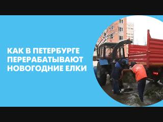 Как в Петербурге перерабатывают новогодние елки