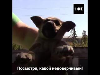 Блогеры Рома и Саша спасают животных...