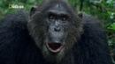 Королевство обезьян. Часть 1. Битва королей / Документальный / National Geographic