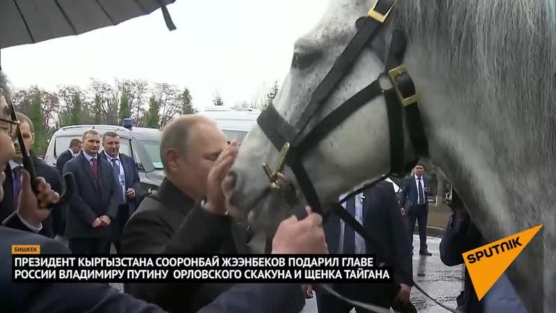 Царь Президент Киргизии подарил Путину коня и щенка. 28.03.2019