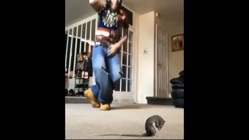 Oh sh t a rat