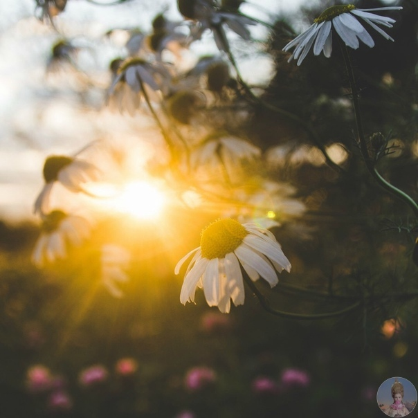 Сентябрьское солнце