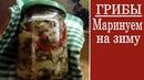 Маринованные грибы Рецепт приготовления на зиму а также для употребления сразу