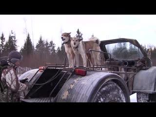 Охотничьи истории. Зимняя Охота на лося.