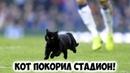 Что творит кот на футбольном поле Прикол, угар!