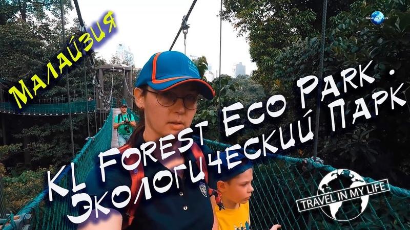 KL Forest Eco Park . Экологический Парк. Куала Лумпур. Малайзия