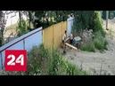 Чаплин отдыхает двое подростков совершили кражу года на Кубани Россия 24
