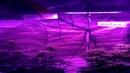 MarsHydro LED Grow Light 300W 600W 1200W Full Spectrum for Hydroponic