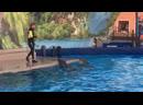 Дельфины зубки чистят