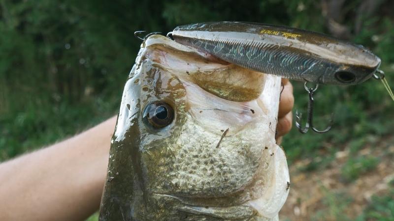 Pesca a spinning al Black Bass con le esche di superficie: Molix TW110B Super Sound