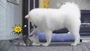 강아지와 고양이의 환장의 케미 🤣 지구뿌셔 우주뿌셔!!