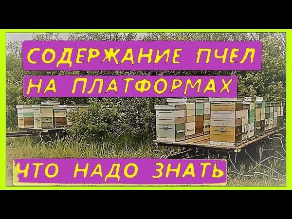 Плюсы и минусы содержания пчел на платформах, слеты при кочевке.