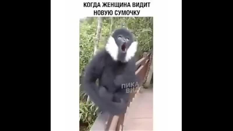 Kogda_zhenschina_videt_novuju_sumochka-spcs.me.mp4