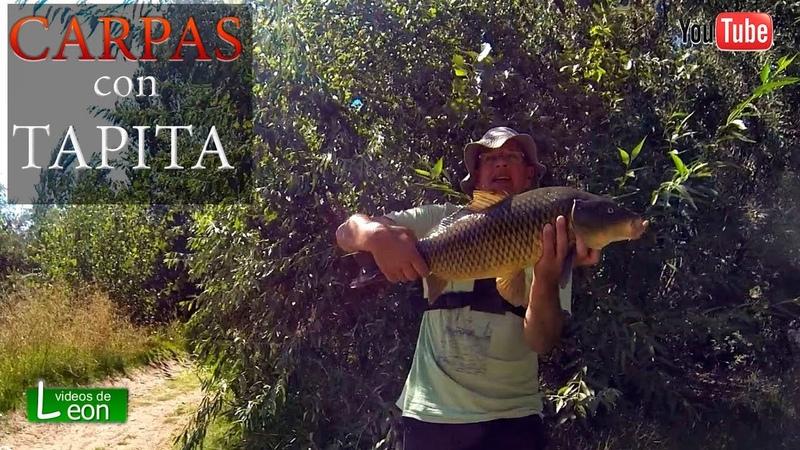 CARPAS con TAPITA de LEON Pescar CARPAS con TAPAS en Choele Choel en Rio Negro