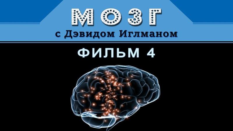 Мозг с Дэвидом Иглманом Как я принимаю решения Фильм 4 HD 720p