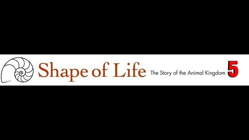 Da Vinci Форма жизни Хордовые Кости мышцы и мозги 5 серия