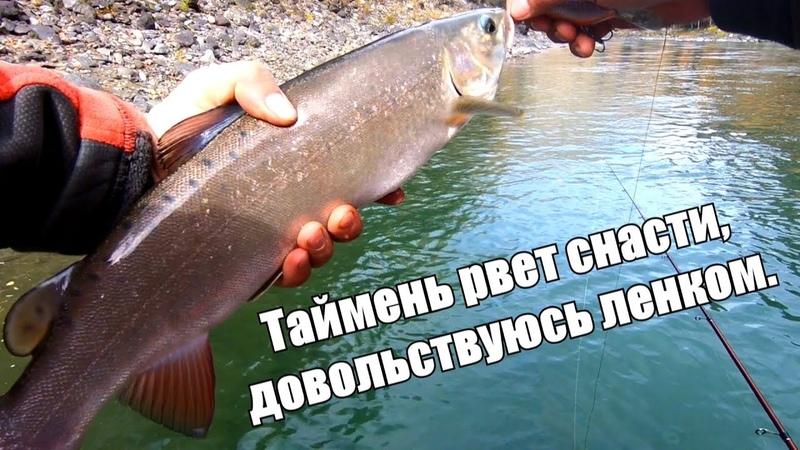 Рыбалка на Алтае - таймень рвет леску/ЛЕНОК, хариус/Штурм реки Аргут на лодках Солар Tohatsu, Выдра