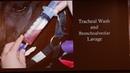 Индуцированное нагрузкой легочное кровотечение у лошадей Exercise-Induced Pulmonary Hemorrhage in Horses (EIPH)