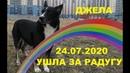 LIVE*RUSSIA: Плачу, наша Джелочка ушла за радугу...
