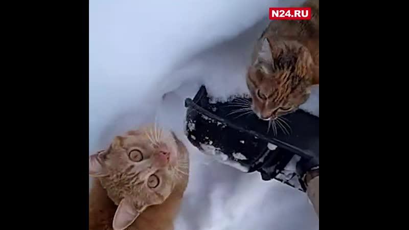 Покорми котика в Тарко Сале запустили антитабачный флешмоб