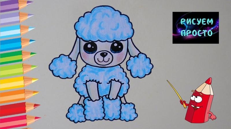 Как ПРОСТО нарисовать СОБАКУ ПУДЕЛЯ/467/How easy it is to draw a DOG POODLE