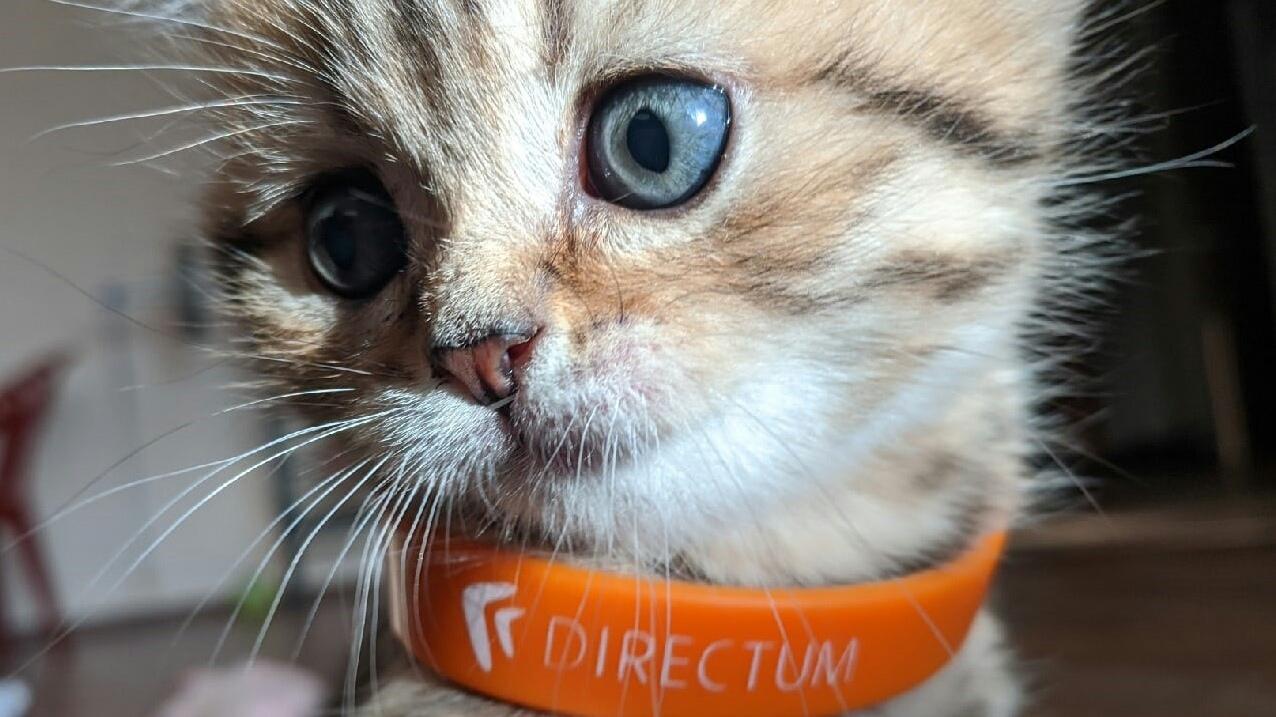 Directum | Про Slack и синхронизацию режимов сна