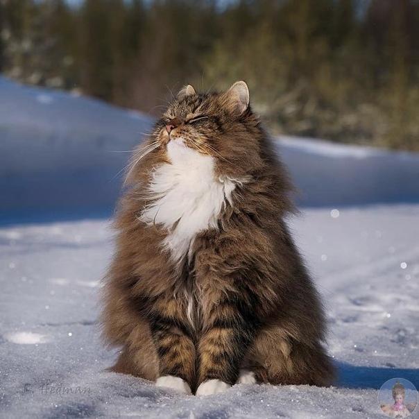 Эти финские пушистики обожают снег