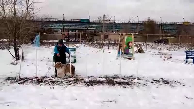 Первый городской Фестиваль Собаки в Большом городеНи мороз, ни снег не помешал нам весело и дружно провести веселые старты!