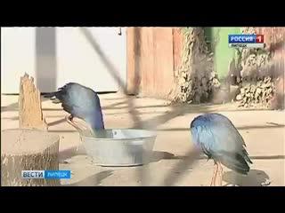 Международный день птиц отметили в липецком зоопарке