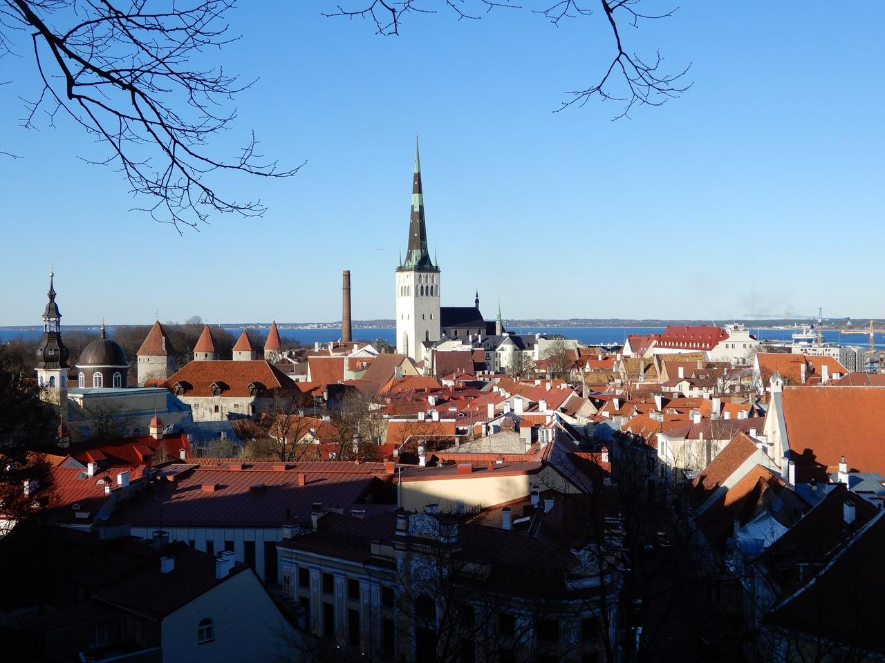 Старый город и башня Святого Олафа как главная доминанта города