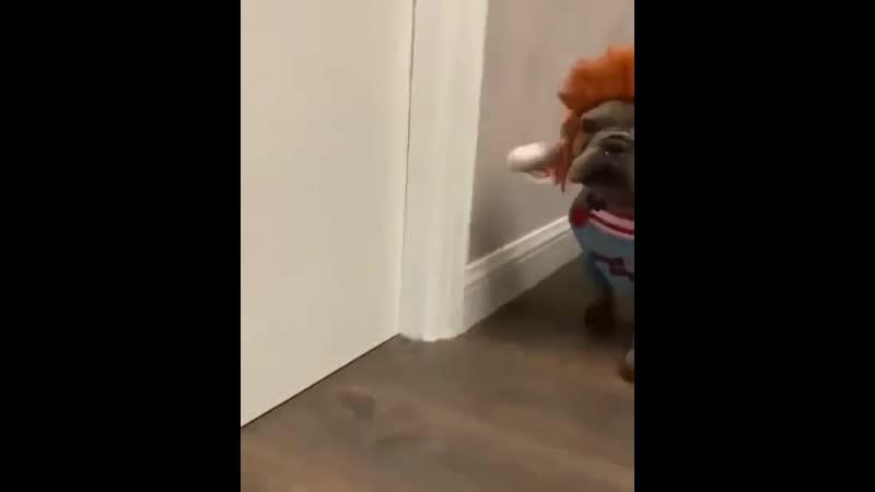 Animals_videoo (инстаграмм)