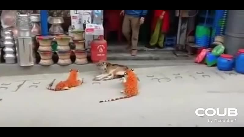 Испуг собаки