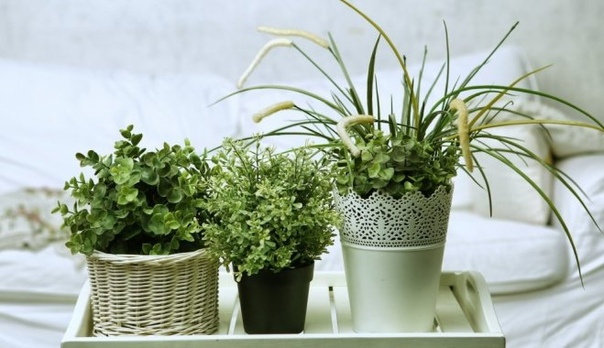 Готовим комнатные растения к зиме