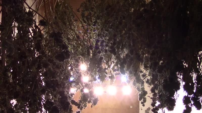 У керчанина оперативники выявили порядка 12 кг марихуаны